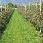 SII aclara que solicitud de devolución activo fijo de plantaciones frutales